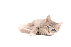 Laying Tabby Kitten Royalty Free Stock Photography