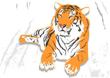 Laying tiger Royalty Free Stock Photo