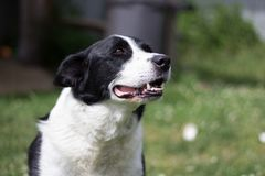 Layla. A cute pooch on a summer day stock images