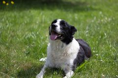 Layla. A cute pooch on a summer day royalty free stock image