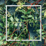 Layout Frame of green leaves, top view . Vegetation nature. Background stock photo