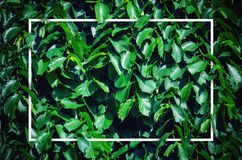 Layout of Green Leaves. Creative Layout of Green Leaves with White Border Frame. White Frame with Empty Space for Placing Text in the Center. Flat Lay. Nature stock images