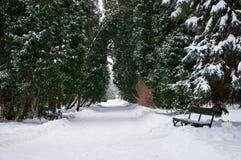 Lazienki公园在冬天。 免版税库存照片