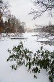 Lazienki公园在冬天 库存照片