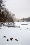 Lazienki公园 库存照片