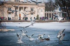 Lazienki-Park Stockbild