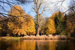 Lazienki Park Autumn Scenery. In Warsaw, Poland royalty free stock images