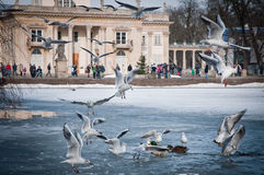 Lazienki Park. Mews with Palace on the Water building in Lazienki Park (also called Lazienkowski Park or Lazienki Krolewskie - literally Baths Park or Royal stock image