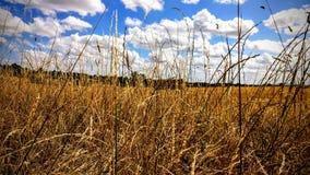 lazing auf einem Feld an einem sonnigen Nachmittag Lizenzfreie Stockbilder