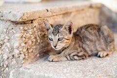 Lazing cat Royalty Free Stock Photo