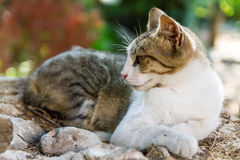 Lazing cat Royalty Free Stock Photography