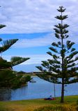 Lazing Under The Pine. Photograph taken at West Lakes featuring a woman relaxing under a Norfolk Island Pine Tree (Adelaide, Australia stock photo