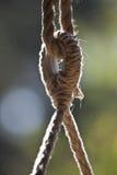 Lazo de la cuerda Imagen de archivo