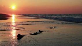 Lazo de la resaca de la salida del sol - orillas del golfo, Alabama almacen de video