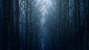 Lazo del paisaje del invierno almacen de video