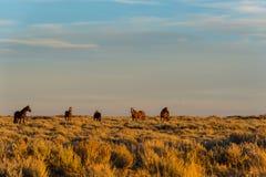 Lazo escénico del caballo salvaje, Wyoming Imágenes de archivo libres de regalías