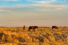 Lazo escénico del caballo salvaje, Wyoming Foto de archivo