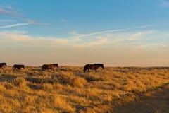 Lazo escénico del caballo salvaje, Wyoming Foto de archivo libre de regalías