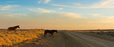Lazo escénico del caballo salvaje, Wyoming Fotografía de archivo libre de regalías