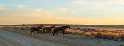 Lazo escénico del caballo salvaje, Wyoming Fotos de archivo