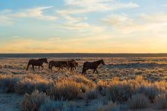 Lazo escénico del caballo salvaje, Wyoming Fotos de archivo libres de regalías