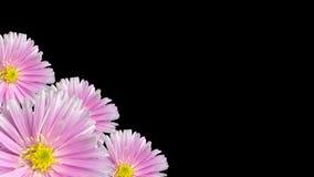 Lazo floral violeta inconsútil del fondo 3d rinden metrajes
