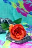 Lazo negro gris con las rosas rojas en un fondo verde Foto de archivo libre de regalías