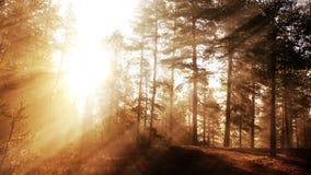 Lazo soleado del bosque del otoño metrajes