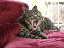 Lazy afternoon yawn Royalty Free Stock Image
