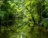 Louisiana Green Bayou stock photography