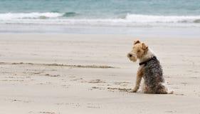 Lazy Beach Dog Stock Images
