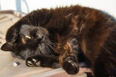 Lazy black cat Royalty Free Stock Photography