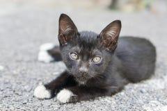 Lazy black cat lay on concrete outdoor floor Stock Photos
