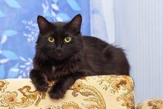 Lazy black cat Stock Image