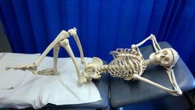 Lazy bones. Skeleton laying on hospital bed bones stock photo