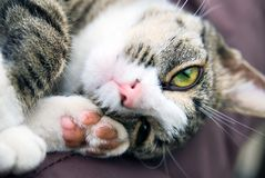 Lazy cat Stock Images