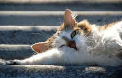 Lazy cat. Under the sun rays Stock Images
