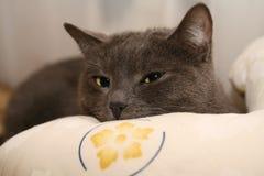 Lazy cat Stock Photos