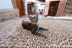 Lazy cat. Lying on a sidewalk made of stones Royalty Free Stock Images
