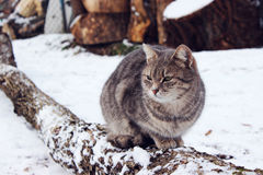 Lazy cat. Funny cat sitting on the  big log Royalty Free Stock Photos