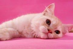 Lazy cat. A cat lying down Stock Photo