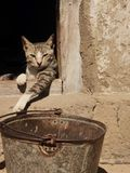 Lazy cat in Africa Royalty Free Stock Photography