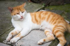 A lazy cat in the afternoon. In a park stock photos