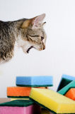 Lazy cat cleaning Stock Image