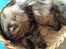 Lazy cat curled up in basket comfortably. Lazy cat lying in basket Stock Photo