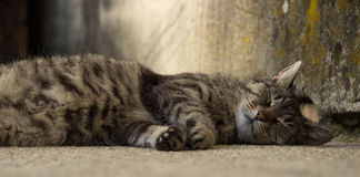 Lazy cat. A lazy cat dozing off in the courtyard Stock Photography