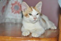 Lazy Cat Royalty Free Stock Photo
