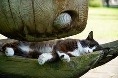 Lazy cat Stock Image