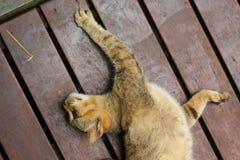 Lazy cat Stock Photography