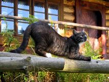 Lazy cat. Photographed in the morning in front of the mountains shelter Stock Images